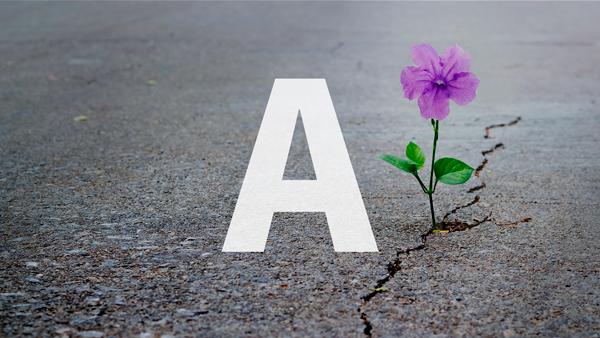 Blume die aus dem Asphalt wächst, mal anders
